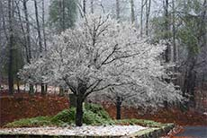 tree-photo-ice-frozen-rain-covered